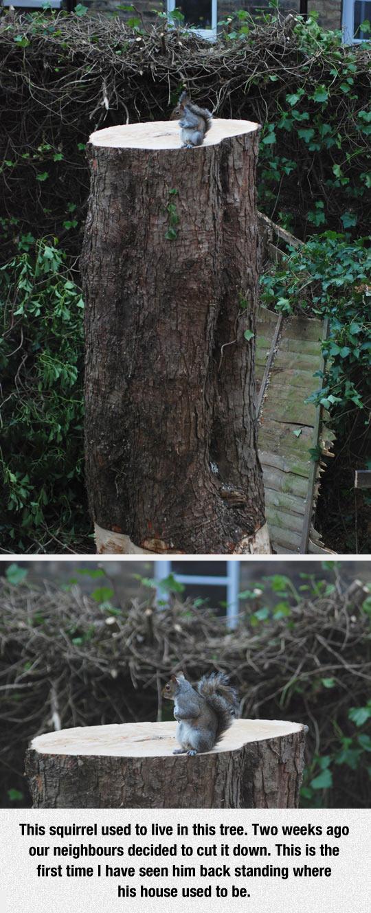 sad-squirrel-tree-woods
