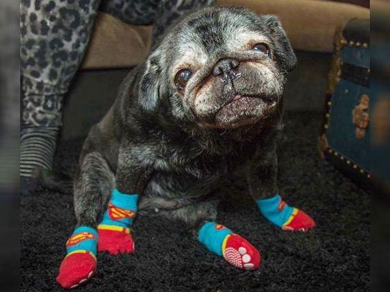 01-pug-socks