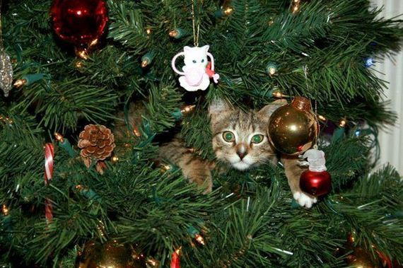 01-cats_in_christmas_trees