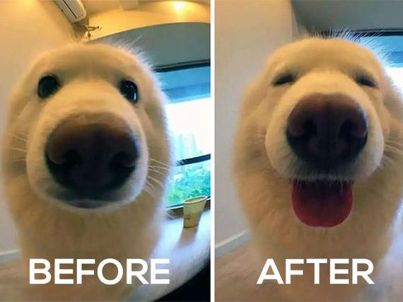 01-pets-before-and-after-being-called-a-good-boy