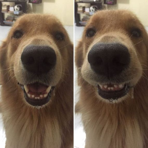 02-pets-before-and-after-being-called-a-good-boy