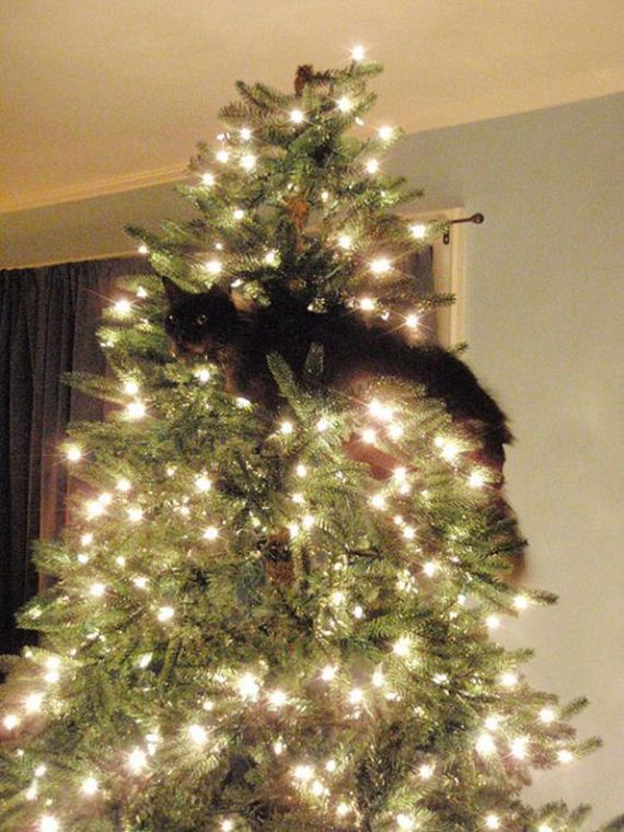 04-cats_in_christmas_trees