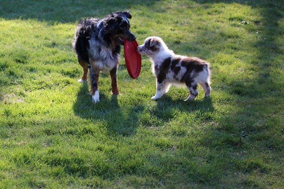 04-puppies-make-me-happy