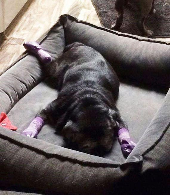 05-pug-socks