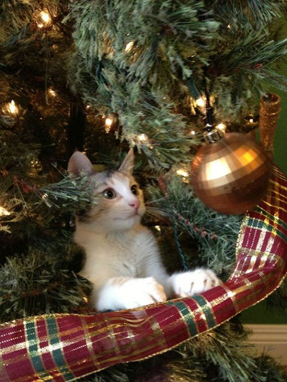 05-cats_in_christmas_trees