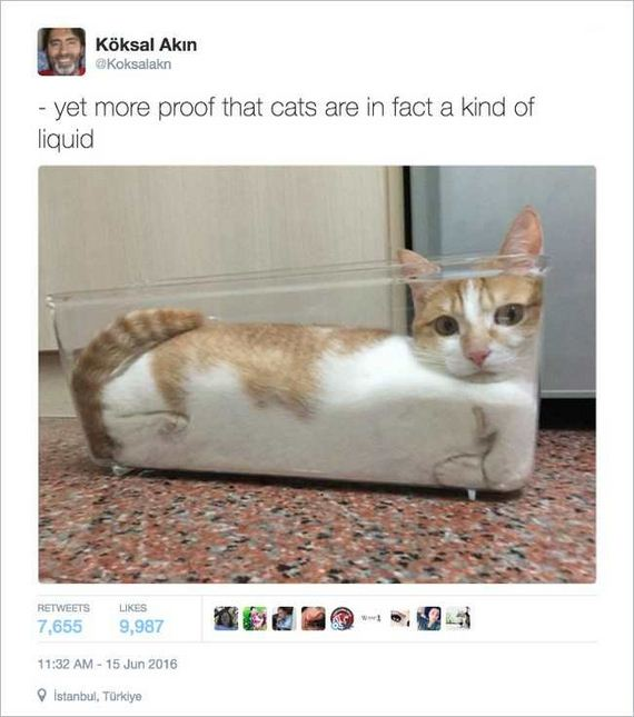 05-funny_cat_tweet