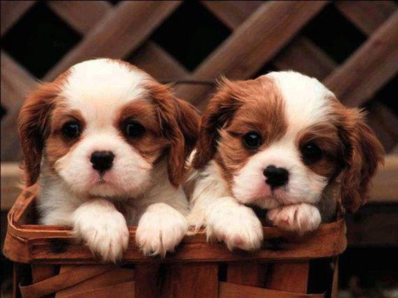 05-puppies-make-me-happy