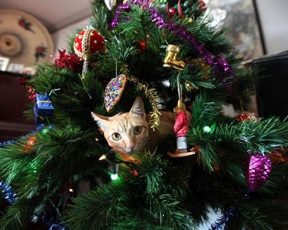 06-cats_in_christmas_trees