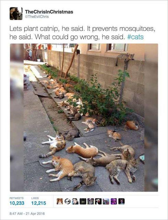 06-funny_cat_tweet
