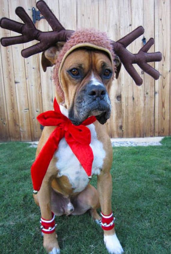 06-merry_christmas_pets