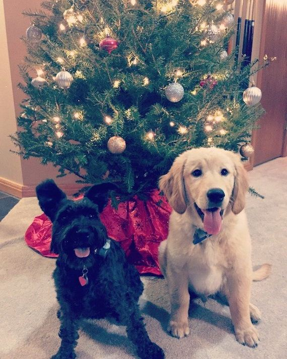06-puppies-make-me-happy
