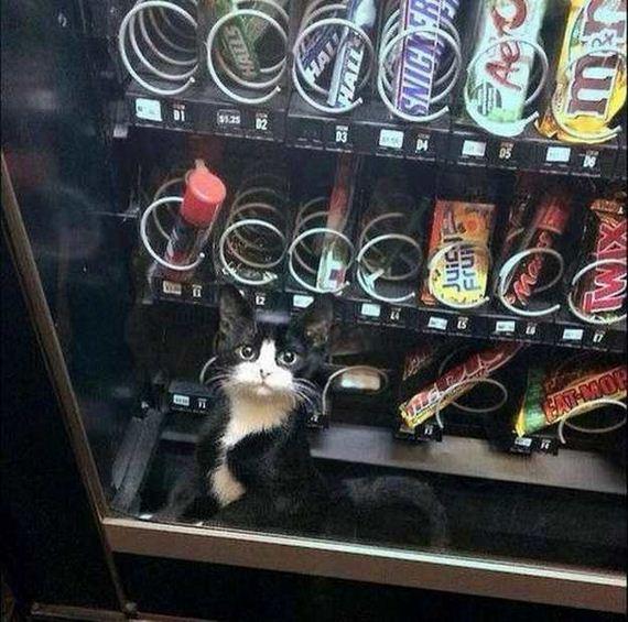 06-vending