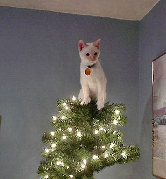 07-cats_in_christmas_trees