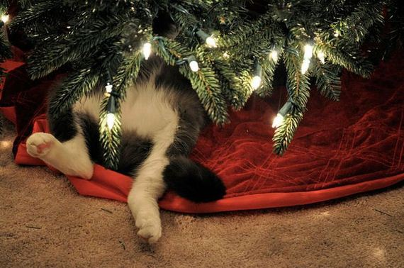 08-cats_in_christmas_trees