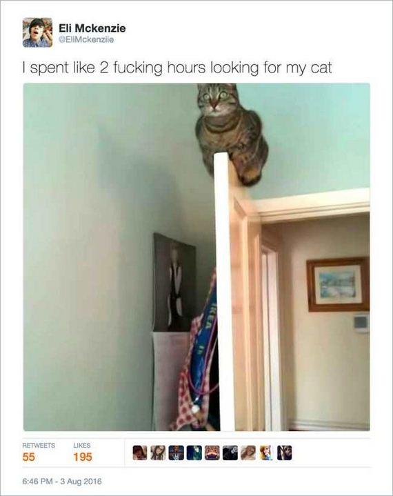 08-funny_cat_tweet