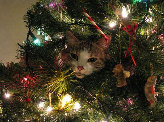 09-cats_in_christmas_trees