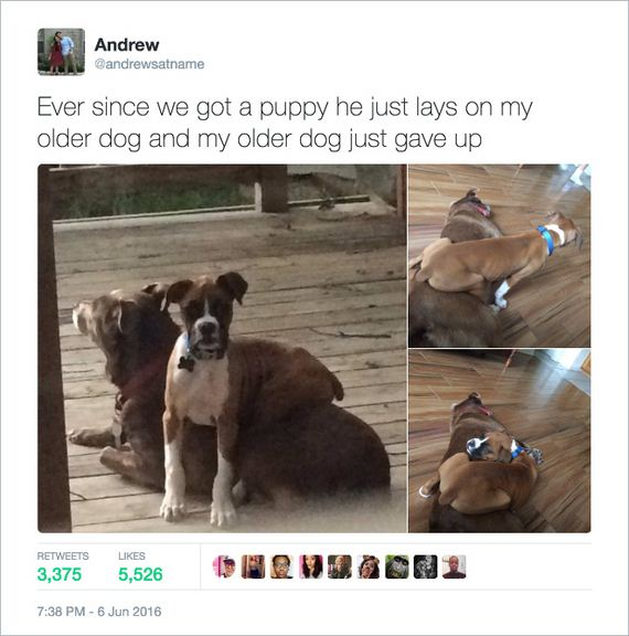 09-funny-dogs1