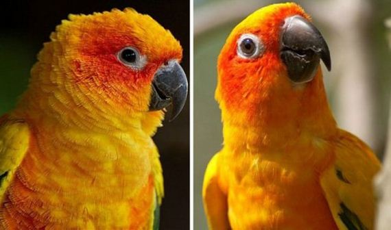 09-pets-before-and-after-being-called-a-good-boy