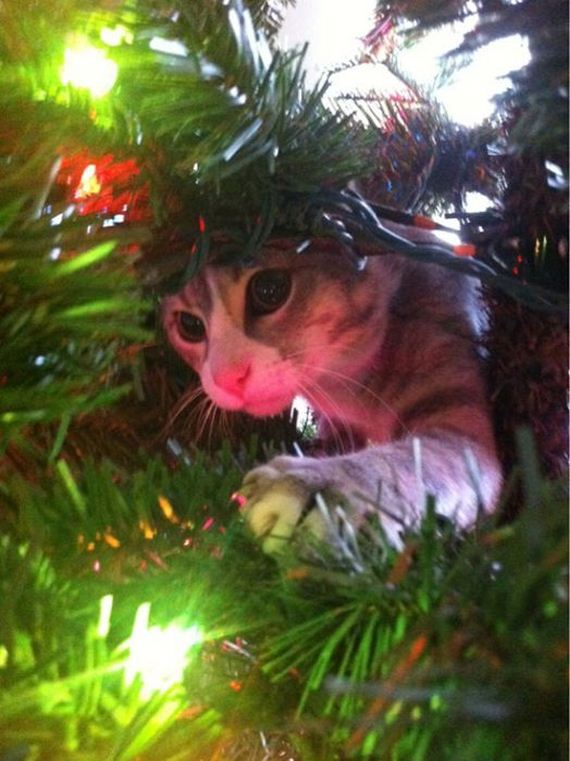 10-cats_in_christmas_trees