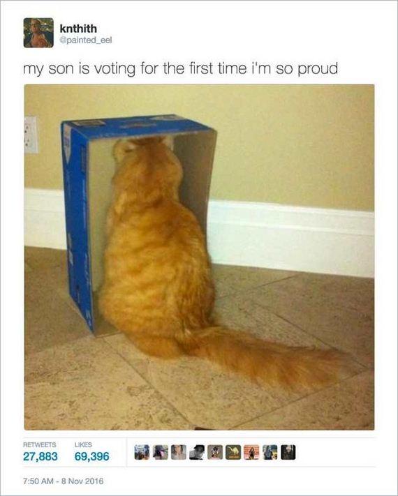 10-funny_cat_tweet
