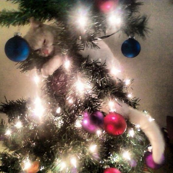11-cats_in_christmas_trees