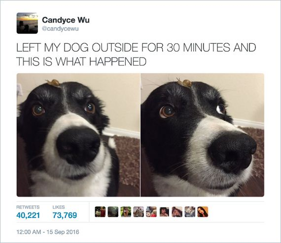 11-funny-dogs1
