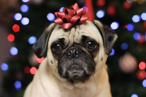 11-merry_christmas_pets