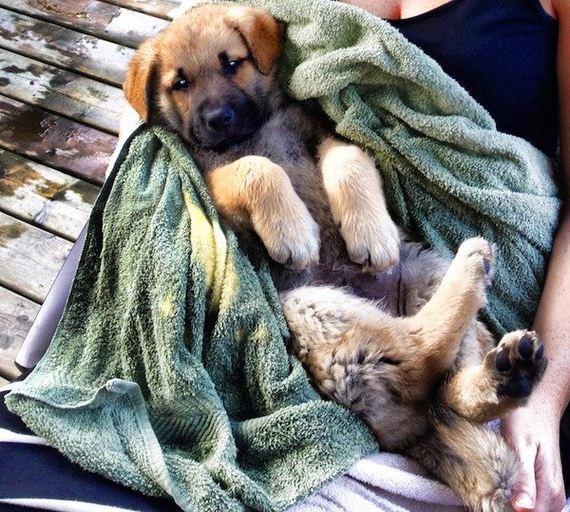 11-puppies-make-me-happy