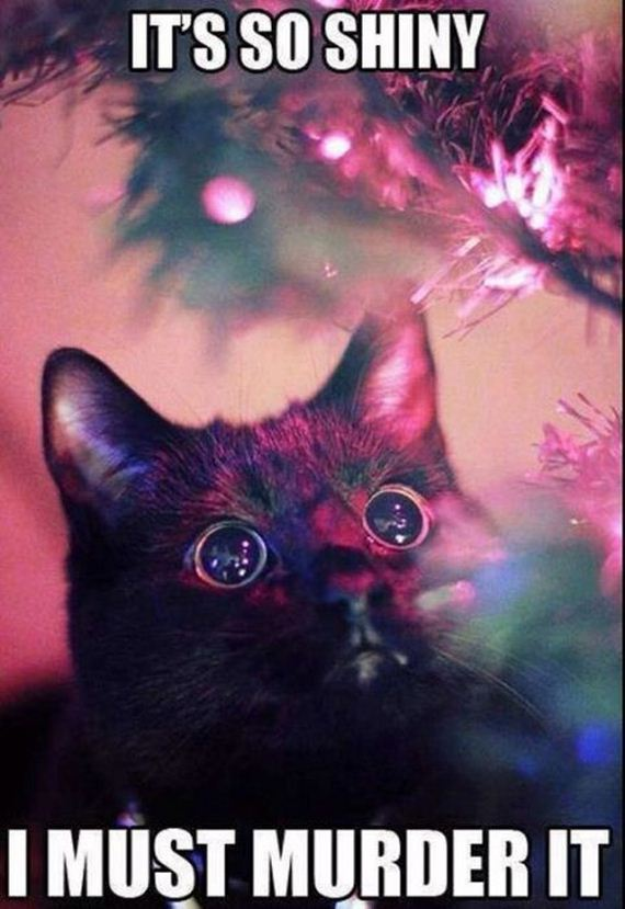 12-cats_in_christmas_trees