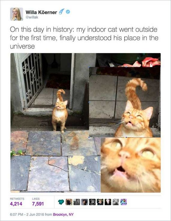 12-funny_cat_tweet