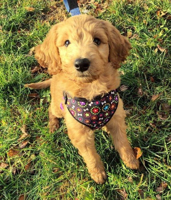 12-puppies-make-me-happy