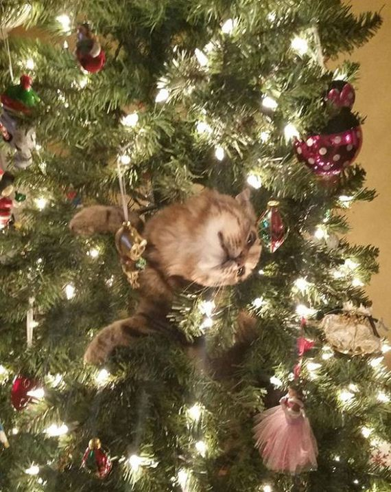 13-cats_in_christmas_trees