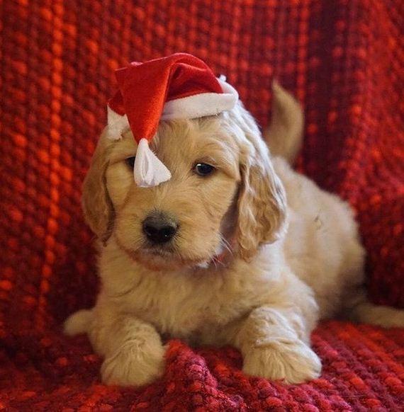 13-puppies-make-me-happy