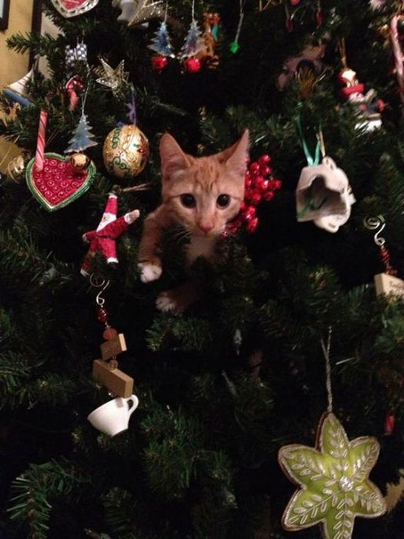 14-cats_in_christmas_trees