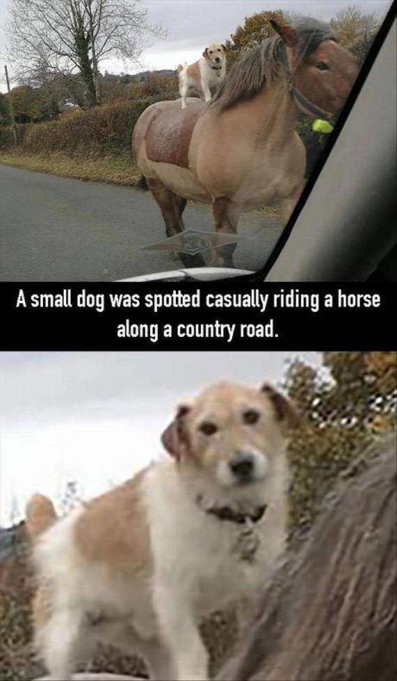 14-funny-animals
