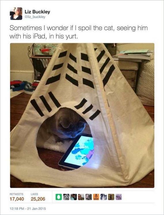 14-funny_cat_tweet