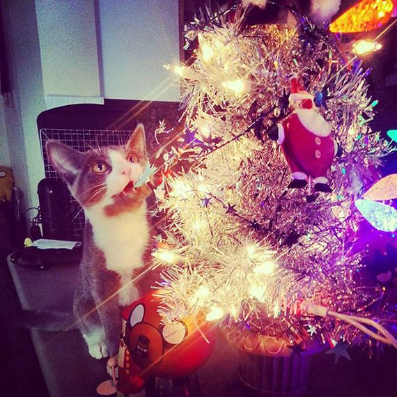 15-cats_in_christmas_trees