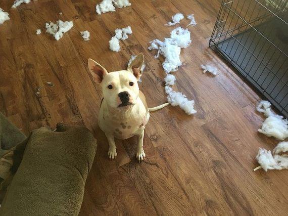 15-puppies-make-me-happy