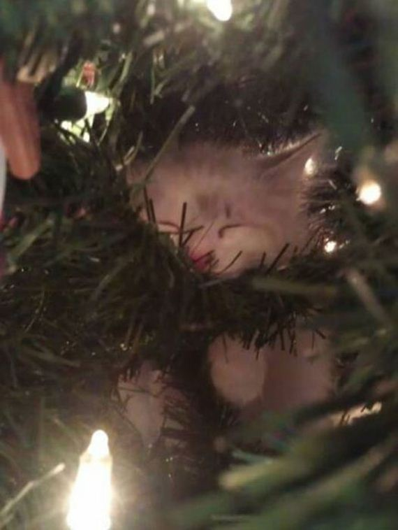 16-cats_in_christmas_trees