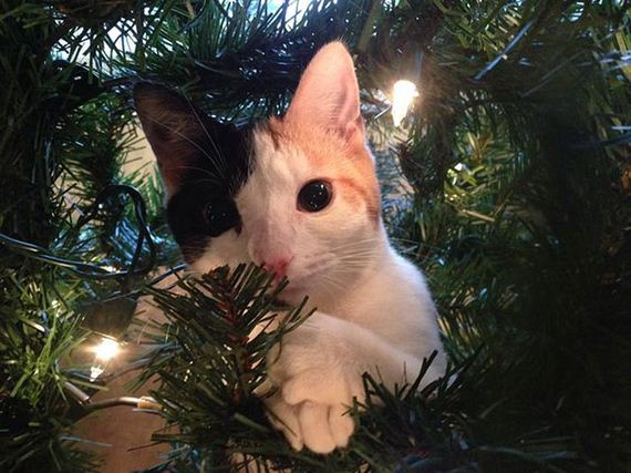 17-cats_in_christmas_trees