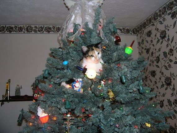 18-cats_in_christmas_trees