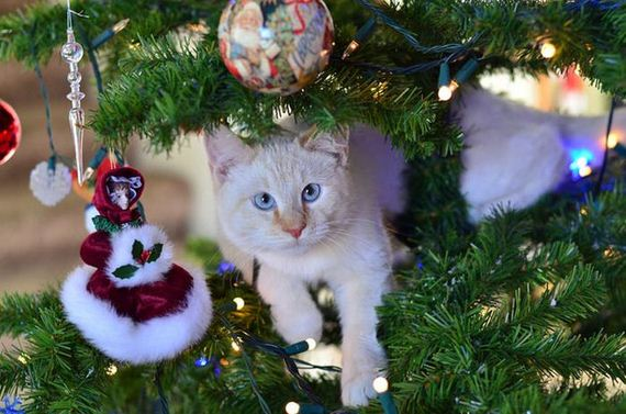 19-cats_in_christmas_trees
