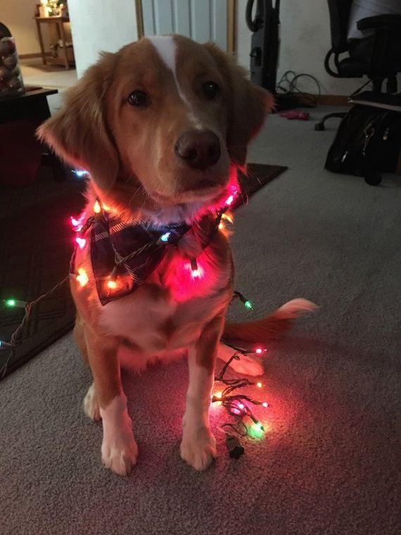 19-puppies-make-me-happy