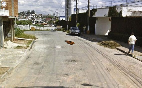 19-wtf-google-map-pictures
