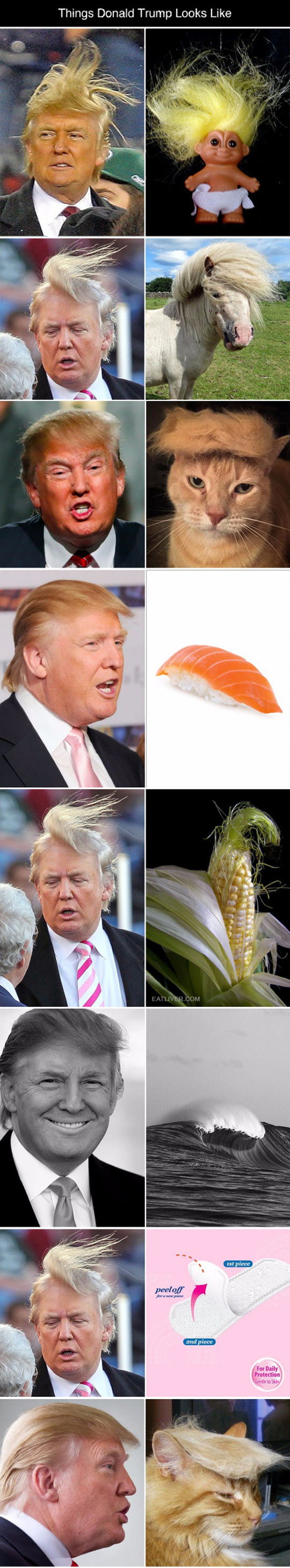 1funny-donald-trump-hair-looking-like-things