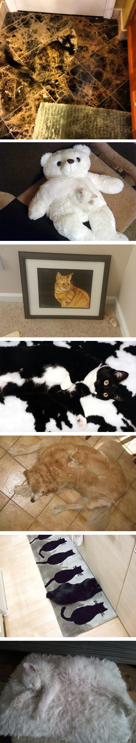 1funny-cat-hide-seek-floor