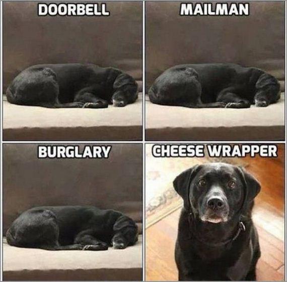 20-funniest-internet-memes
