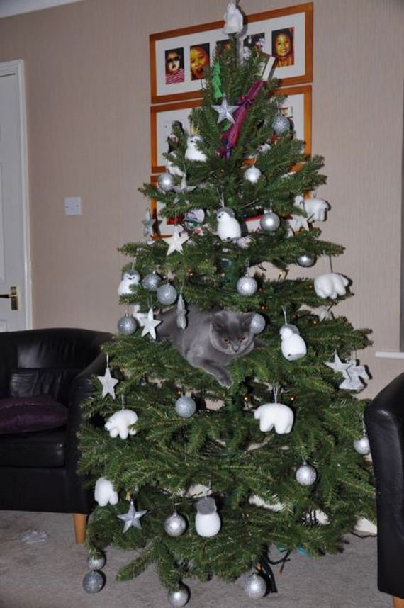 20-cats_in_christmas_trees