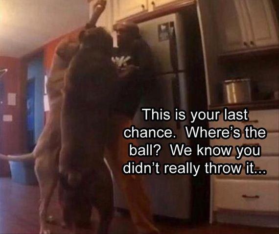 20-funny-animals