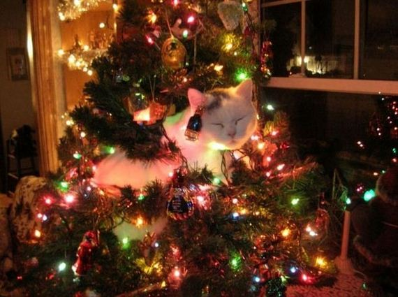 21-cats_in_christmas_trees